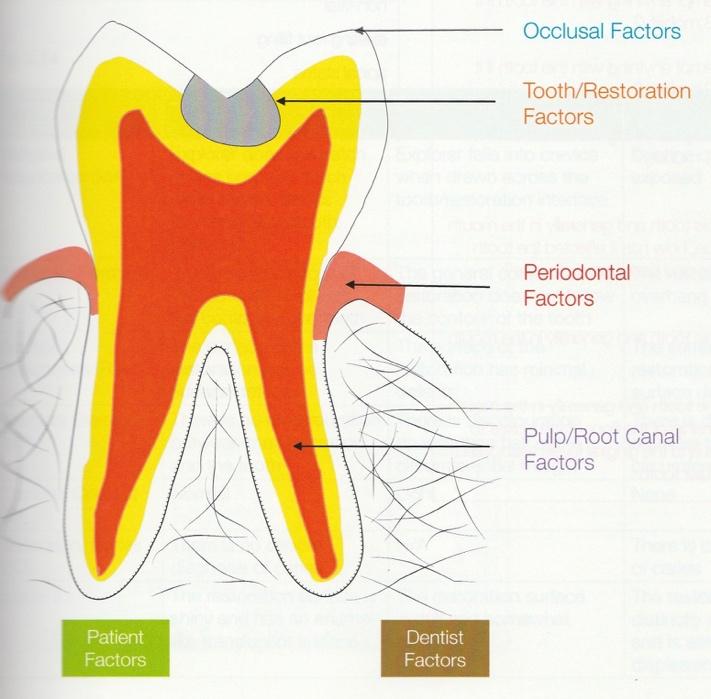 Occlusal factors