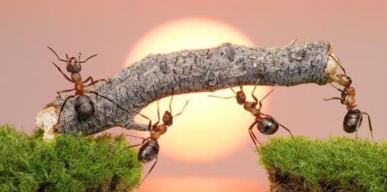 team-of-ants