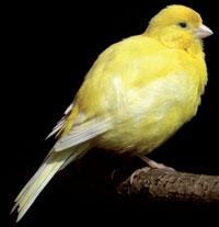 canary-in-coalmine---200